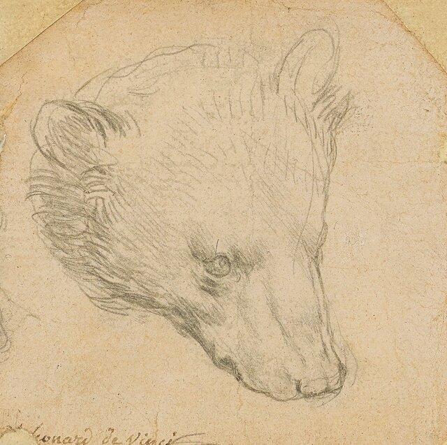 خرس ۸ سانتی داوینچی، ۱۲ میلیون دلار فروخته شد / عکس