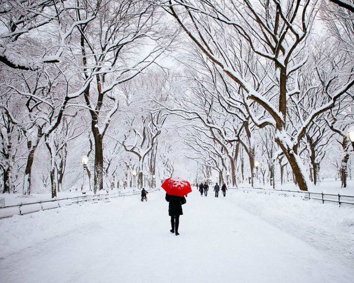چون درختی اندراقصای زمستان با صدای پگاه ماسوری